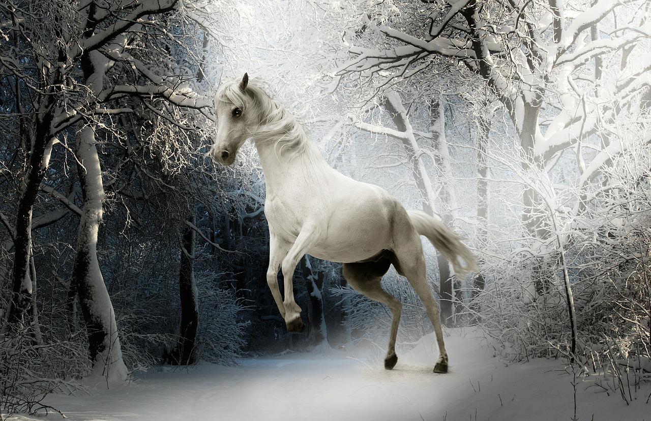 Images libres de droit gratuites neige hiver - Photos de neige gratuites ...